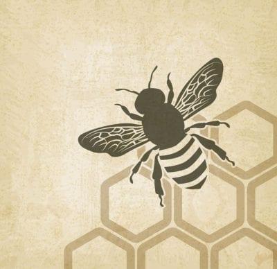 Le Grand Paris de l'Energie #5: Pour un retour des abeilles en ville!