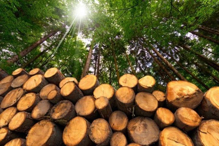 Le bois-énergie