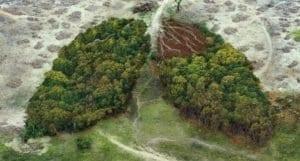jour dépassement déforestation