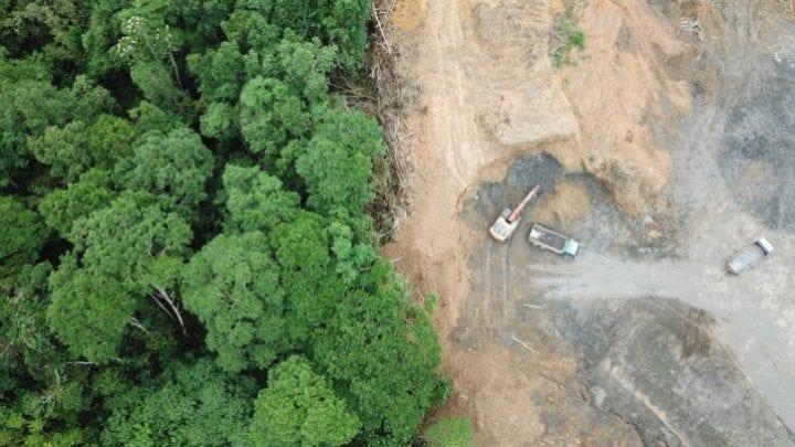 agriculture déforestation