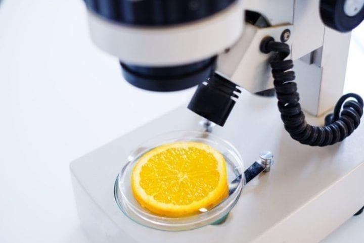 alimentation OGM