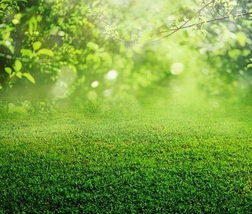 """EDF : un fournisseur """"vert"""""""