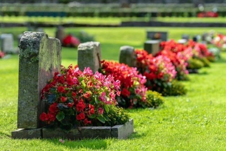 funérailles écologiques