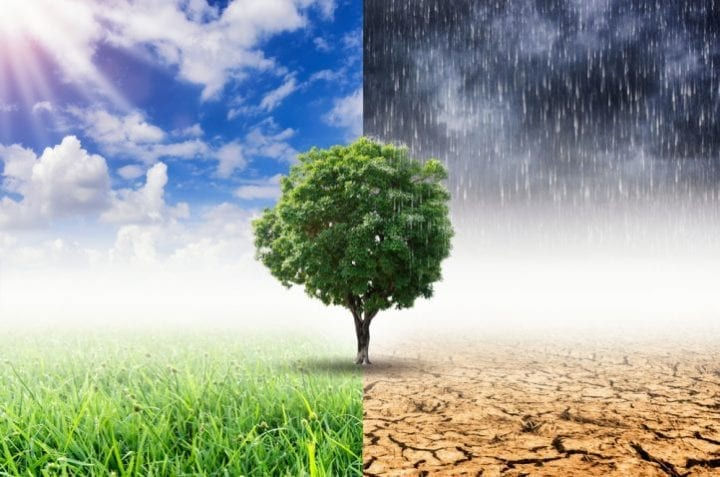 OBS's Cop : étude pour le climat